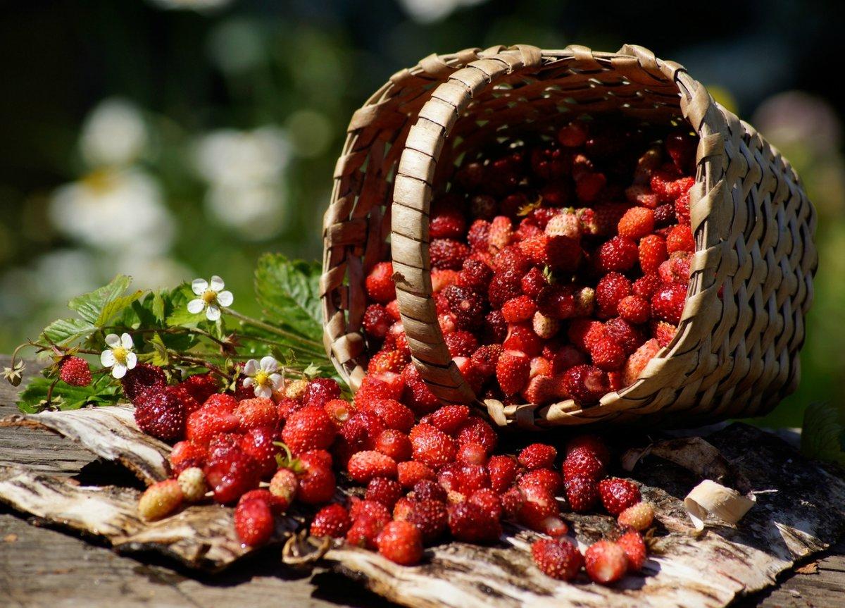 красивые фотографии лета с ягодами решила, что очень-то