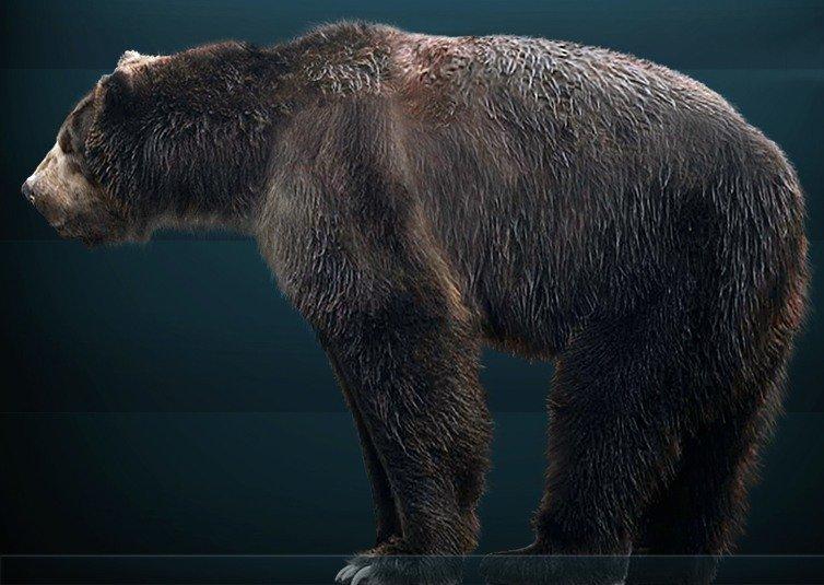 Короткомордый медведь фото