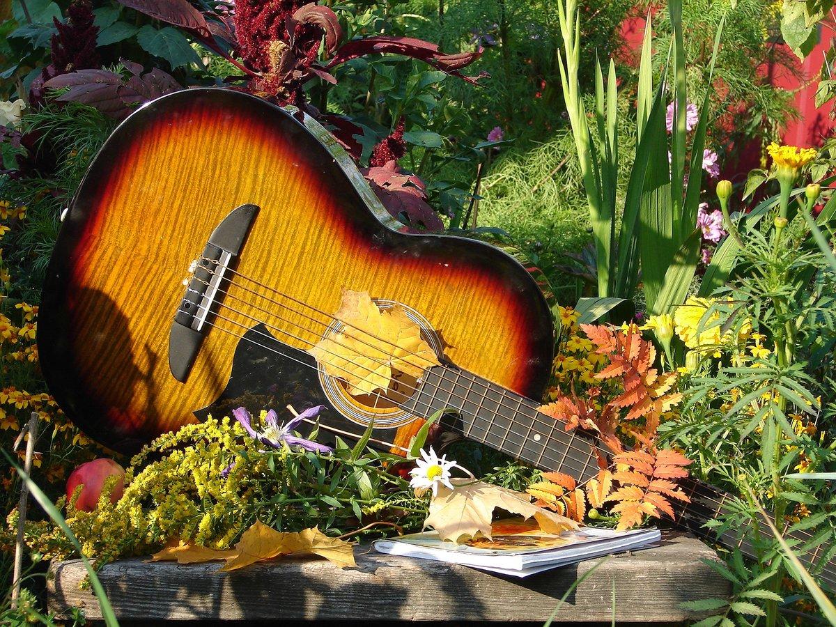 переживаниями гитара и осенние листья картинки букет