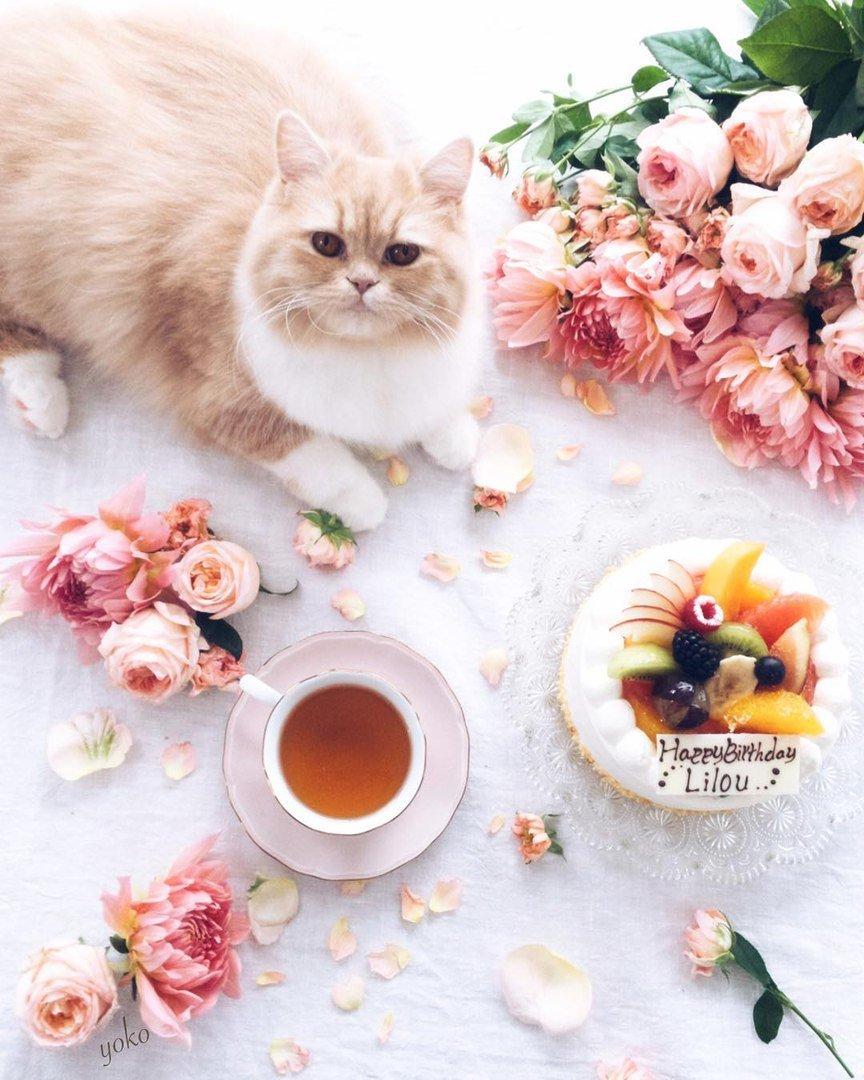 с добрым утром картинки котята красивые этот