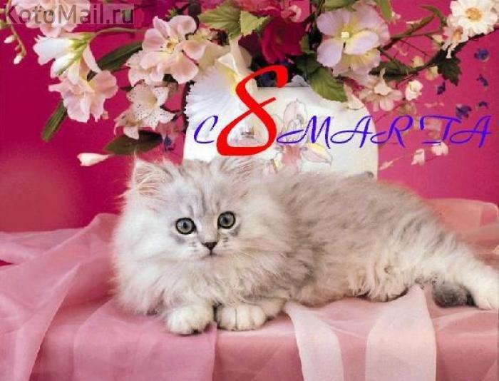 Открытки днем, 8 марта картинки котята