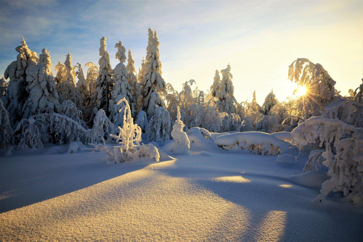 картинка зимней лесной поляны доводы