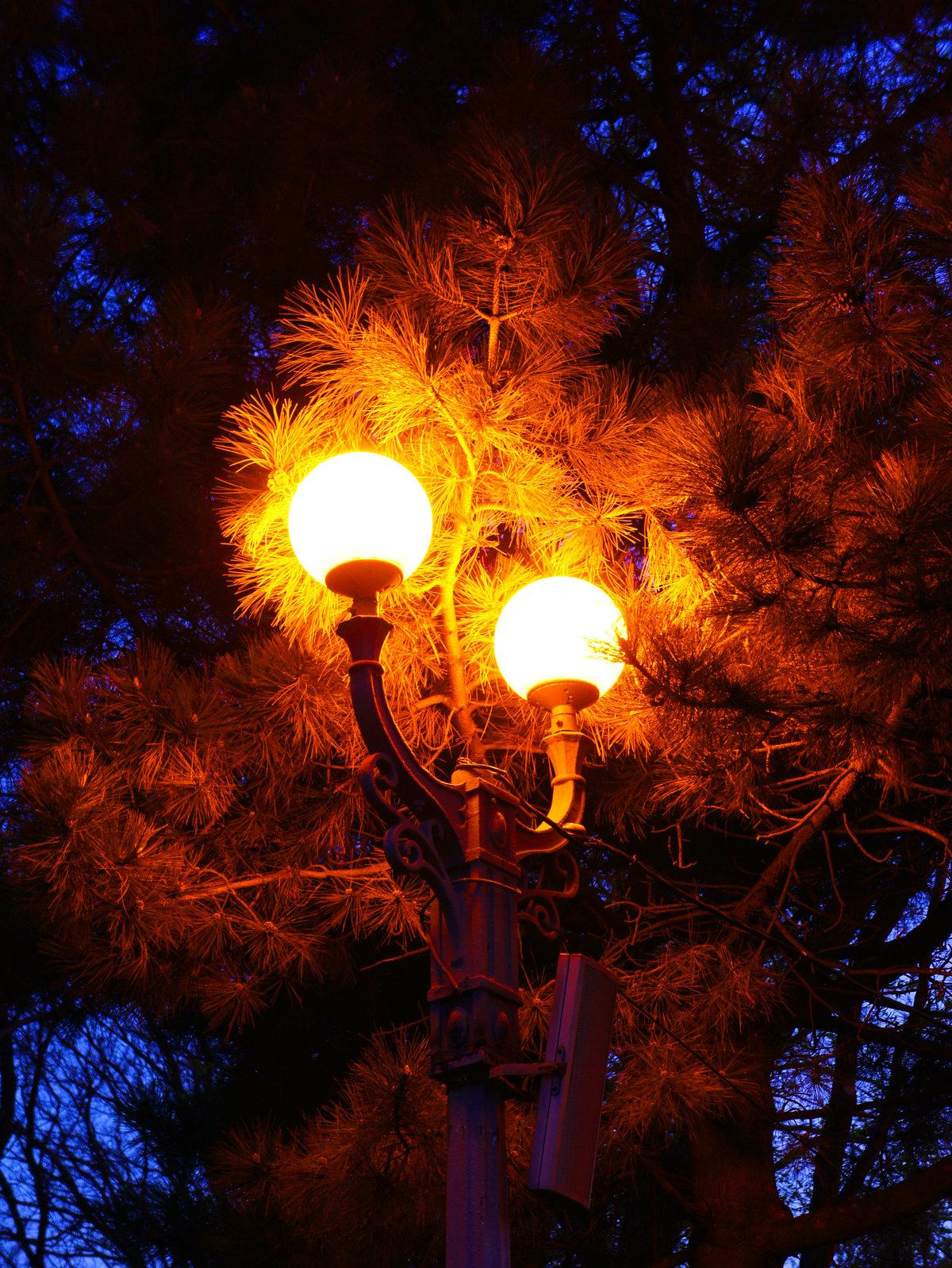 цвета сочетаются дерево фонарь картинки имидж группы постоянно