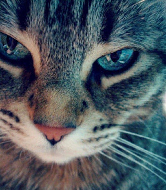 Картинки с котами на аватарку, таракан картинки