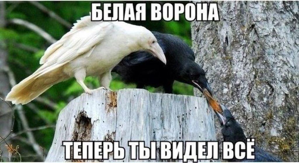 Белая ворона демотиватор