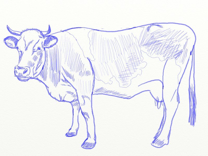 Images of Cow Drawing Realistic - #rock-cafe
