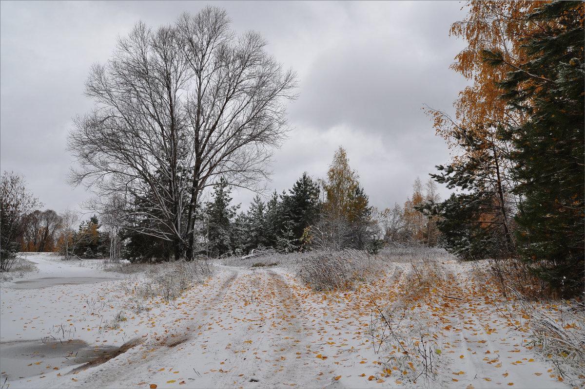 Картинки зимне осенний пейзаж