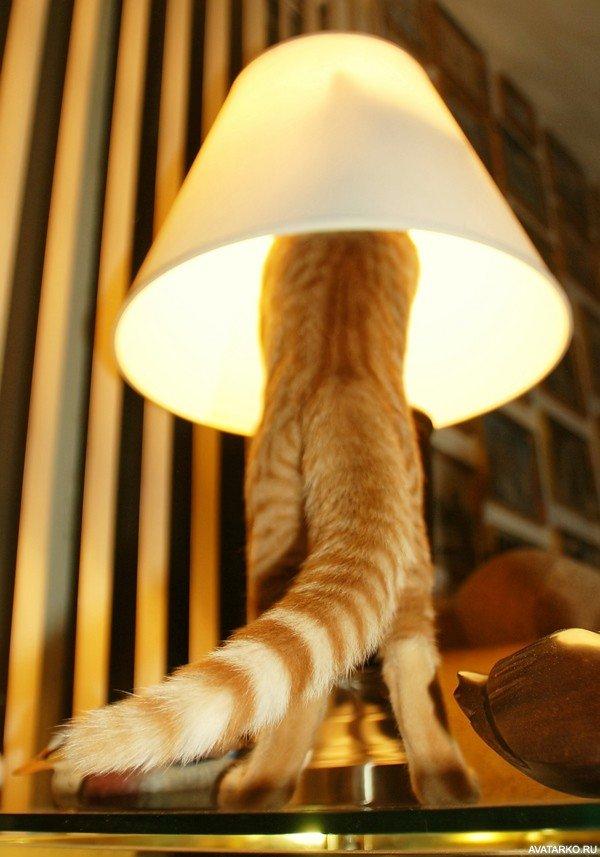 Кот лампа гифка, видами