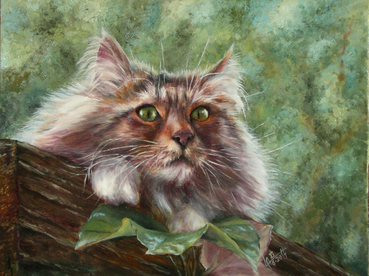 Картинки с котами маслом