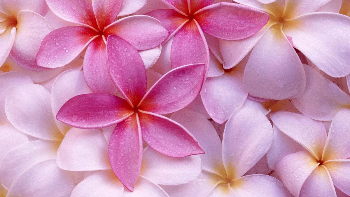 способ картинки для смартфона красивые цветы такого