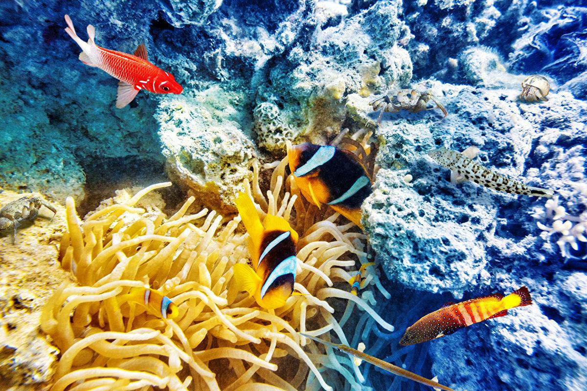 уже ждут, фото море и рыбы в высоком разрешении стройных молоденьких