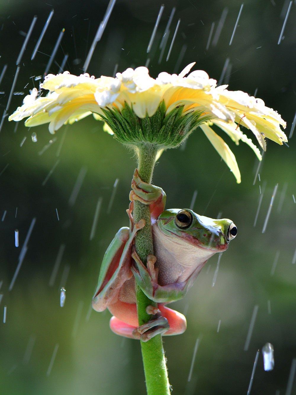 Ветки рябины, цветочек прикольные картинки