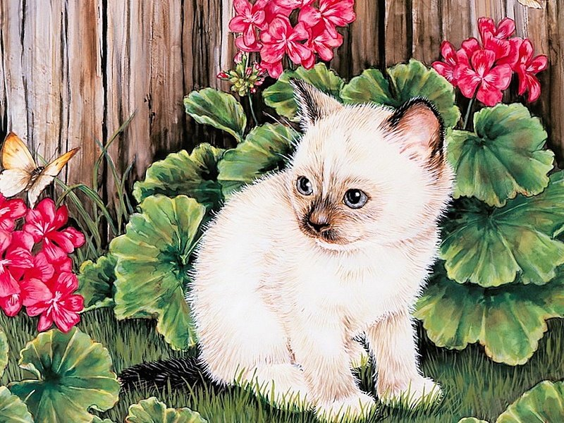 Открытки с сиамскими котятами