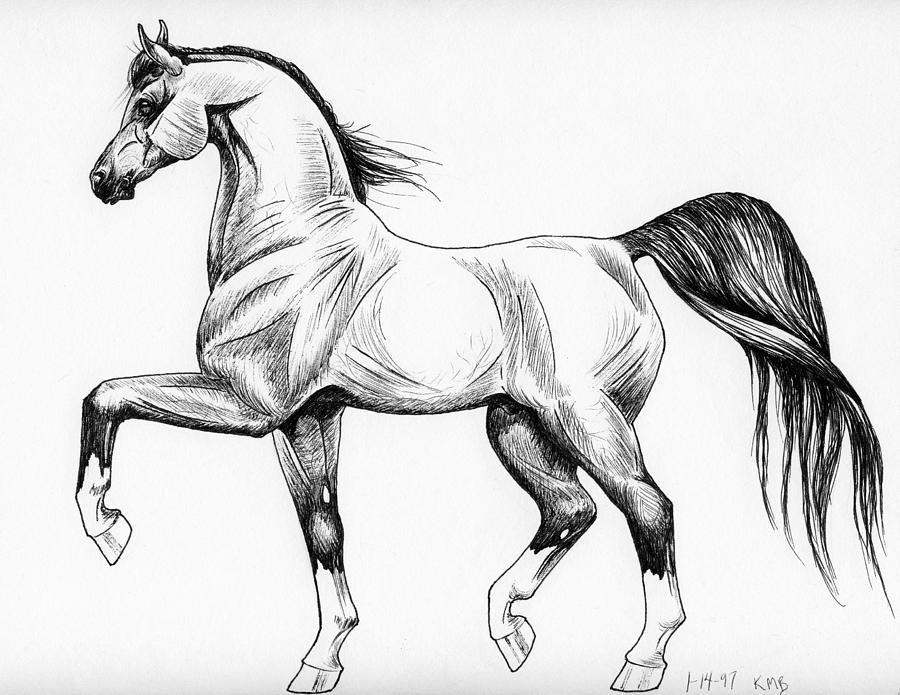 Картинки рисунки с лошадьми