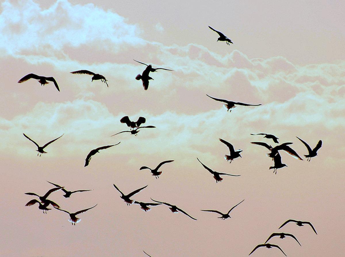 картинки птичек улетающих свое