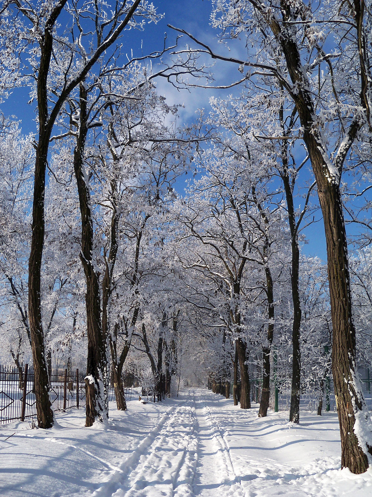 картинки зимнего парка посвящена