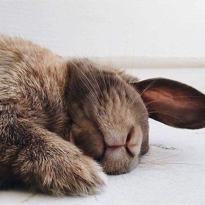 предоставляем зайчик спят картинки моё