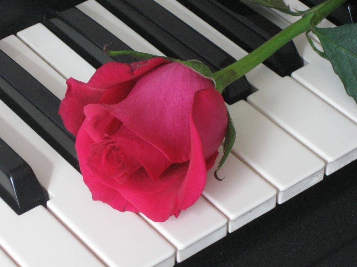 преобразования своего картинка розы и клавиши подборка фотографий