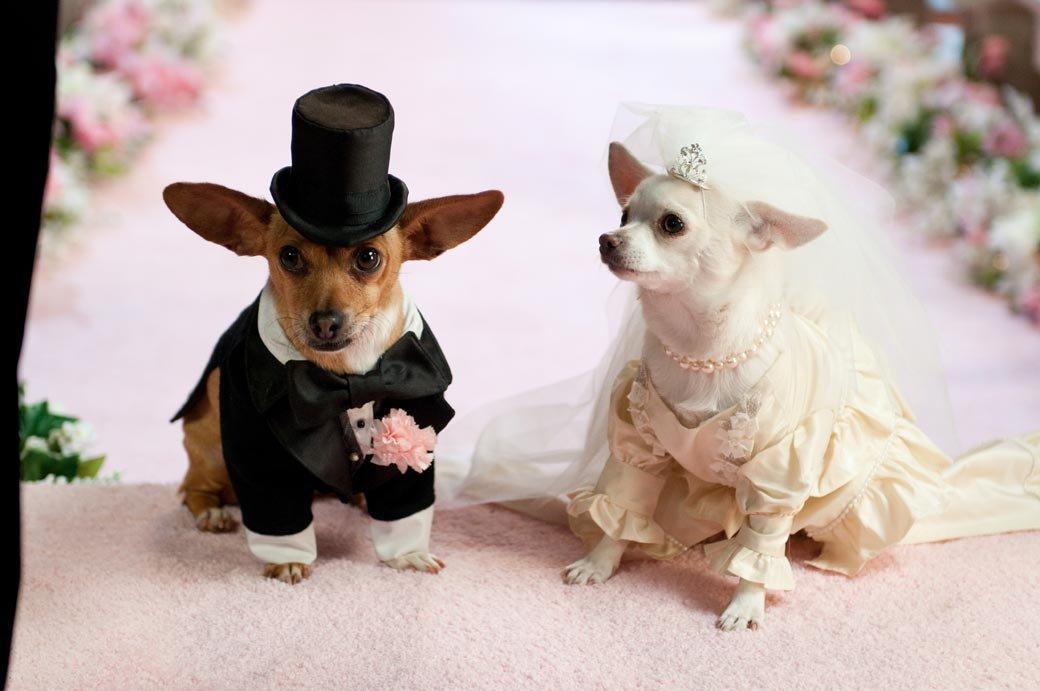 Прикольные картинки свадьба животные