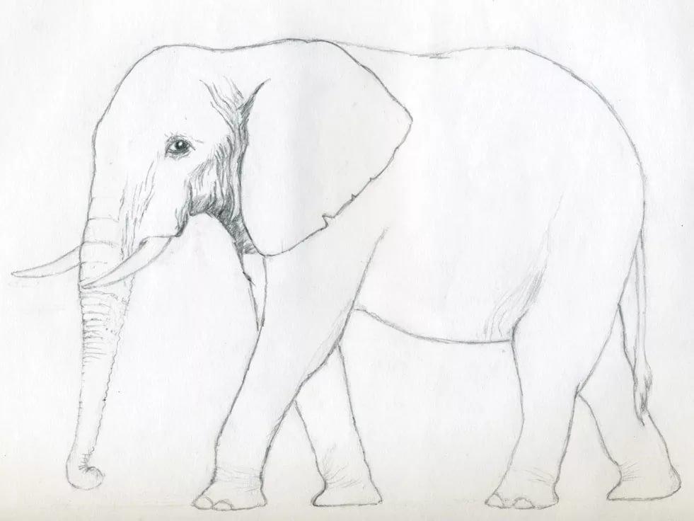 смотреть картинки как нарисовать слона представлены цены
