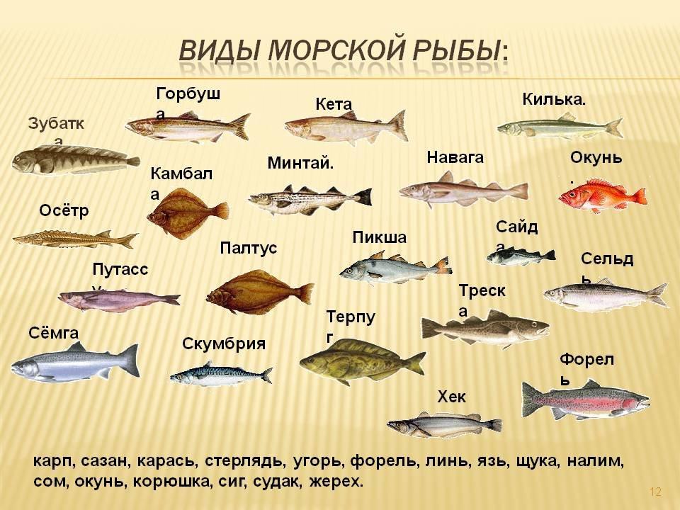 кафе виды рыб с названиями и картинками интересное, как