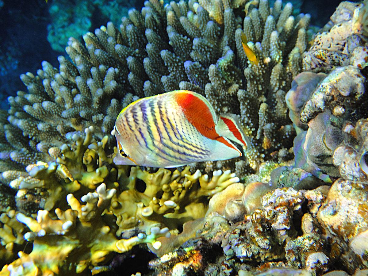 Рыба-камень ‒ причина, по которой в море не рекомендуется заходить босиком.