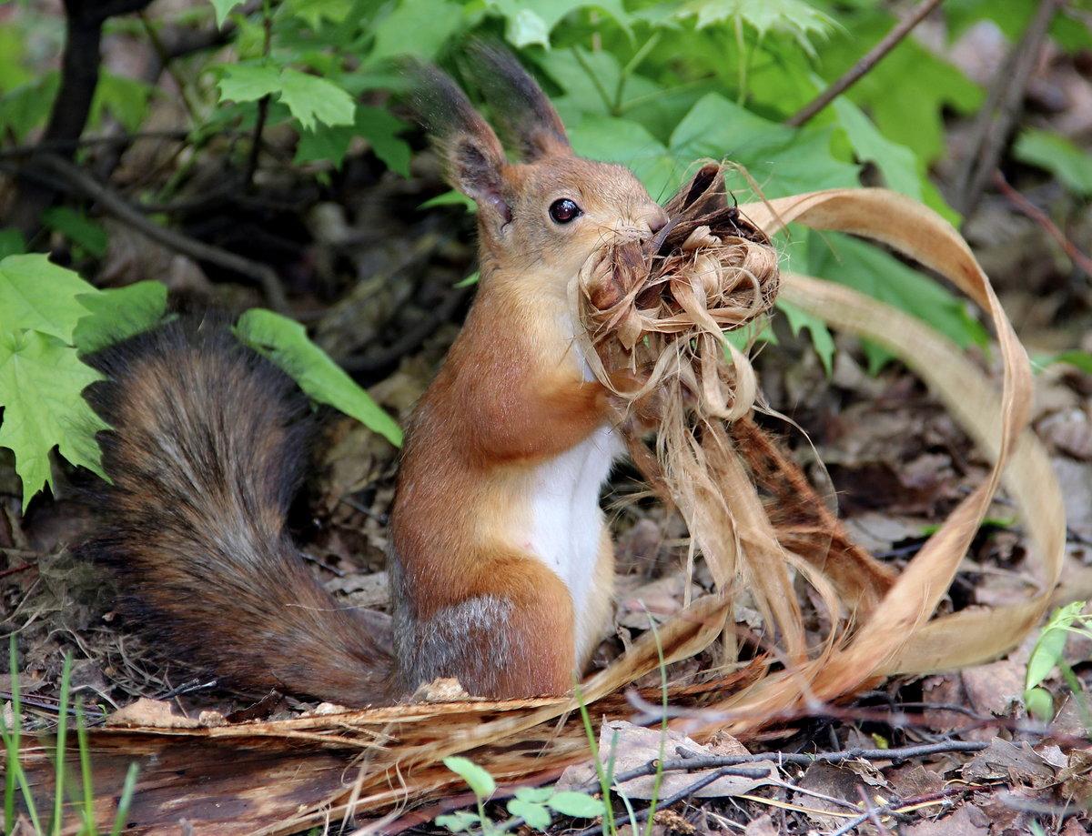 Картинки смешанных лесов животные и растения