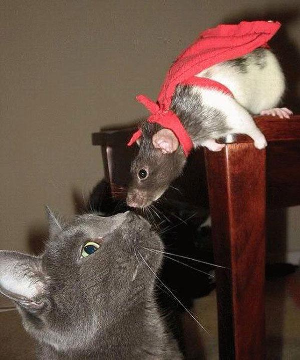 Днем, прикольные картинки с крысами и мышами