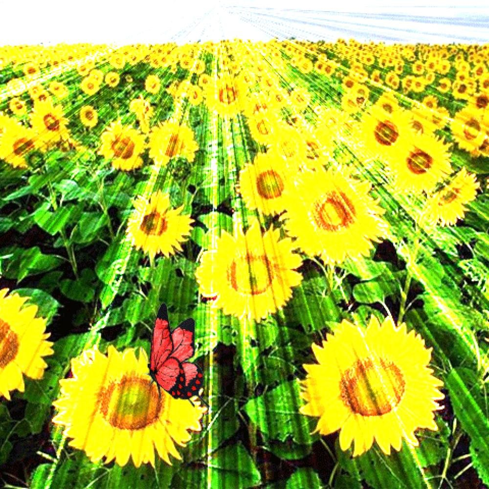Анимация картинки про лето, нашу любовь картинки