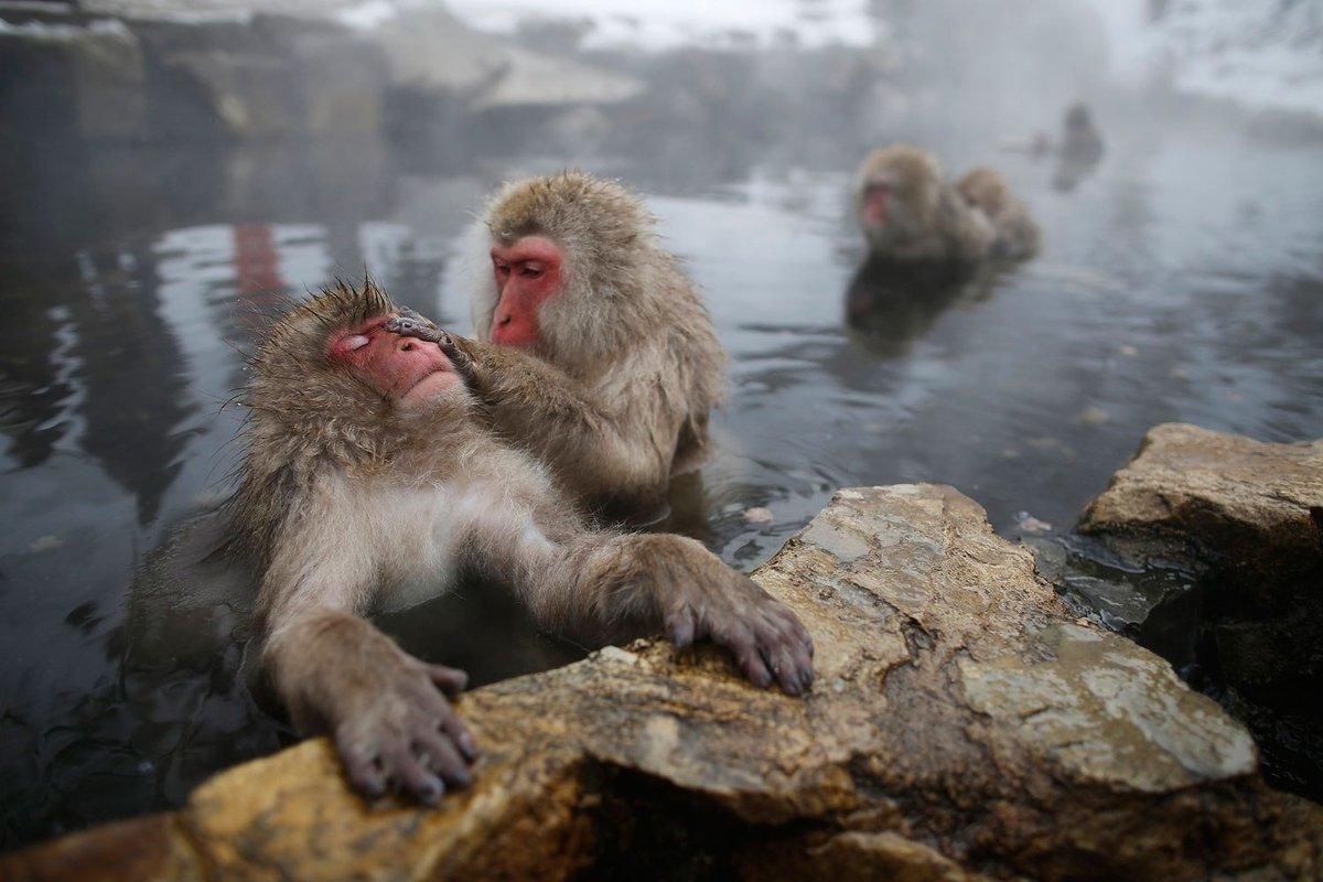 вот обезьяны и вода картинки кенди бар