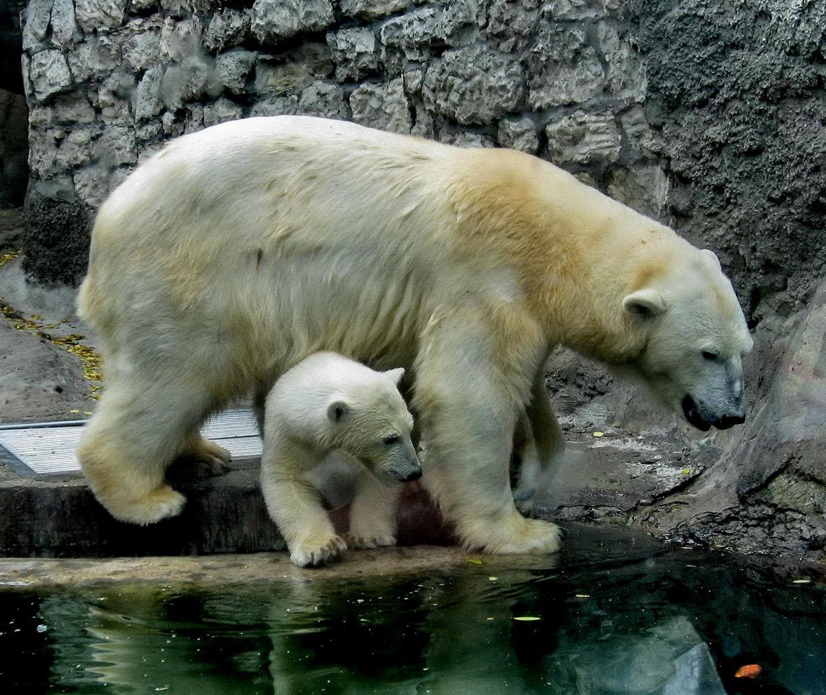 Открытка днем, картинки из зоопарка