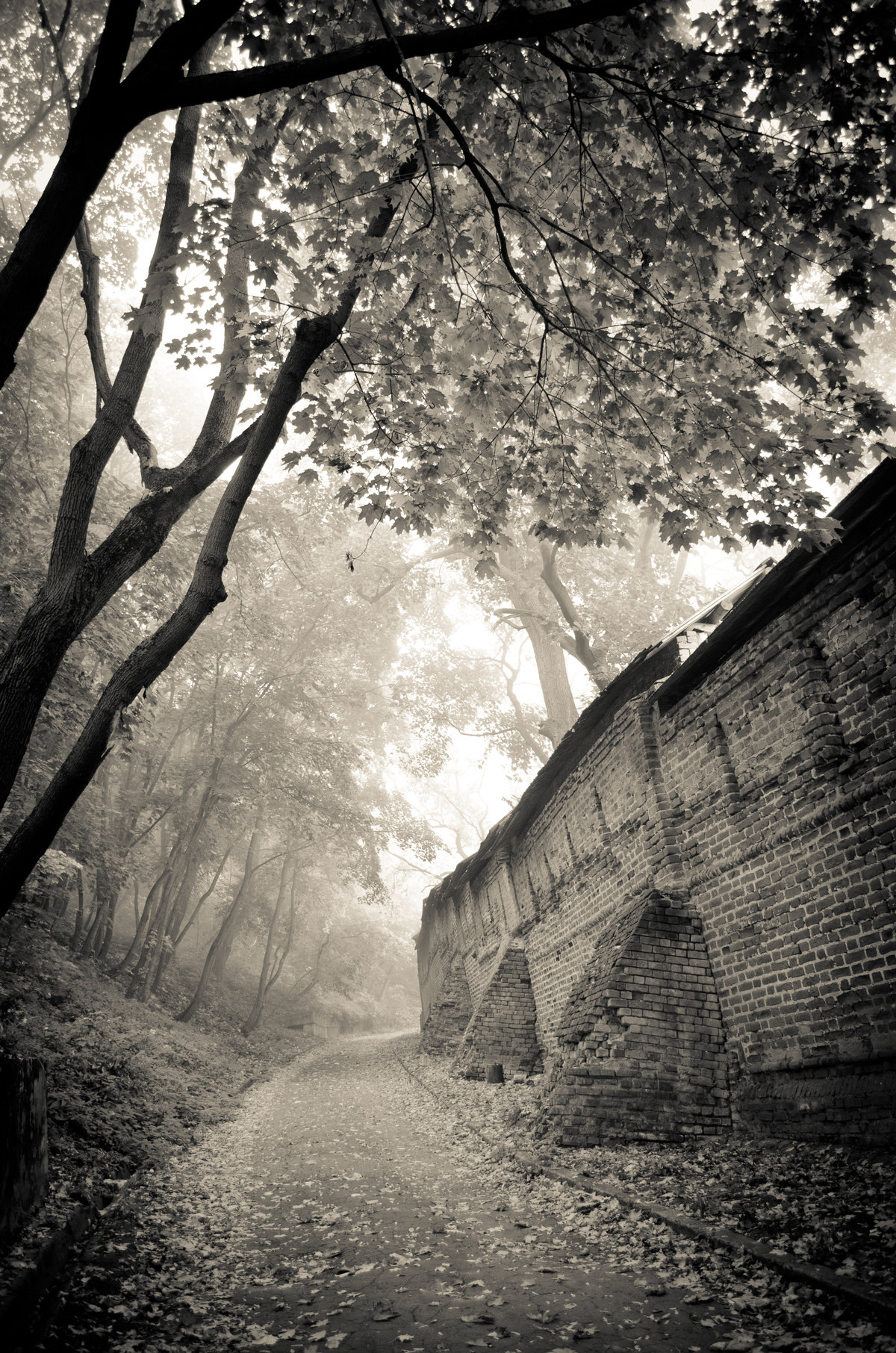 Туманное осенне утро#канатка #осень #тайна #туман #утро