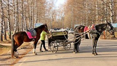 тройка гусем упряжка лошадей