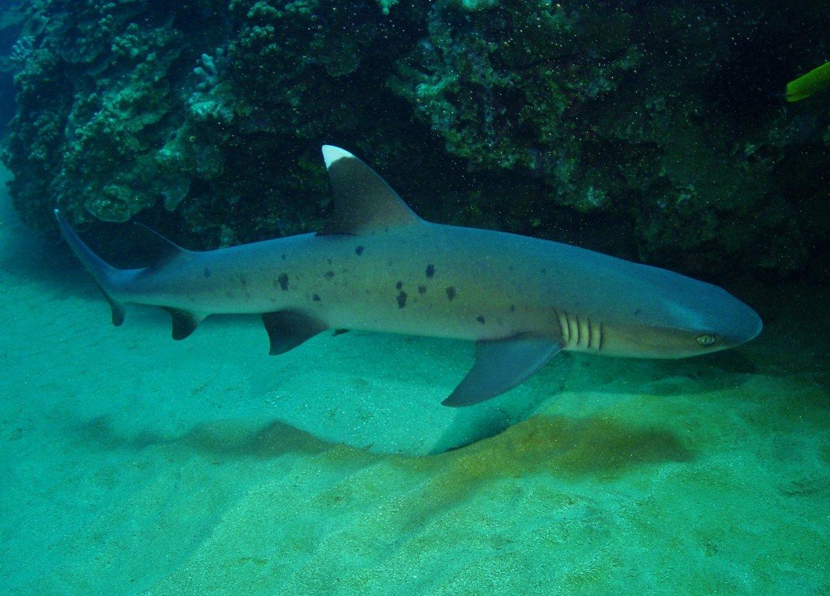 подборку виды акул средиземного моря фото и название один