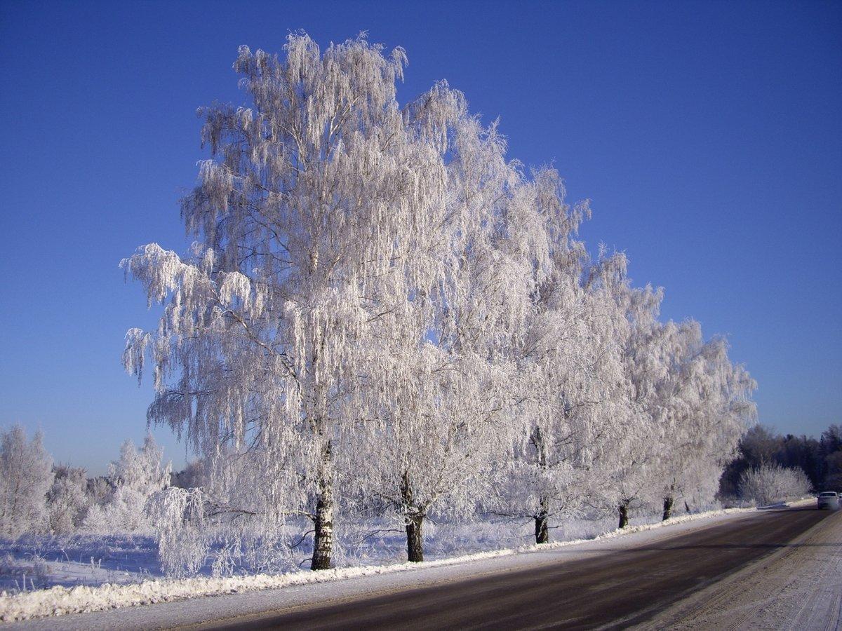 Деревья в инее картинка