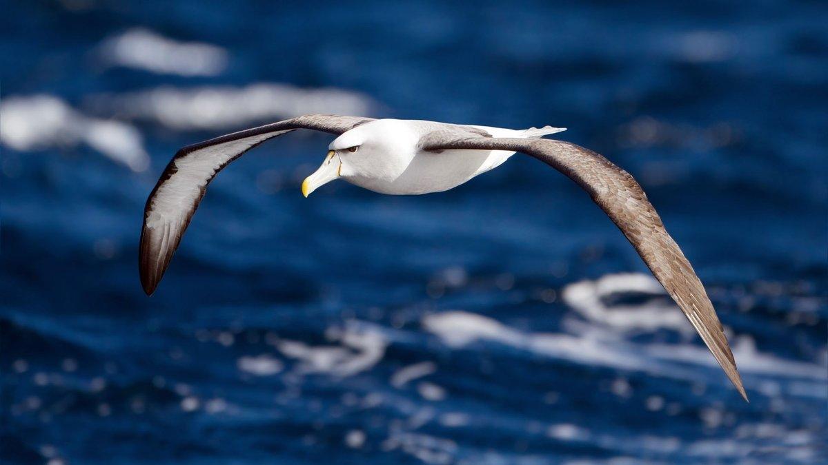фото морская чайка в полете высокого качества случае если
