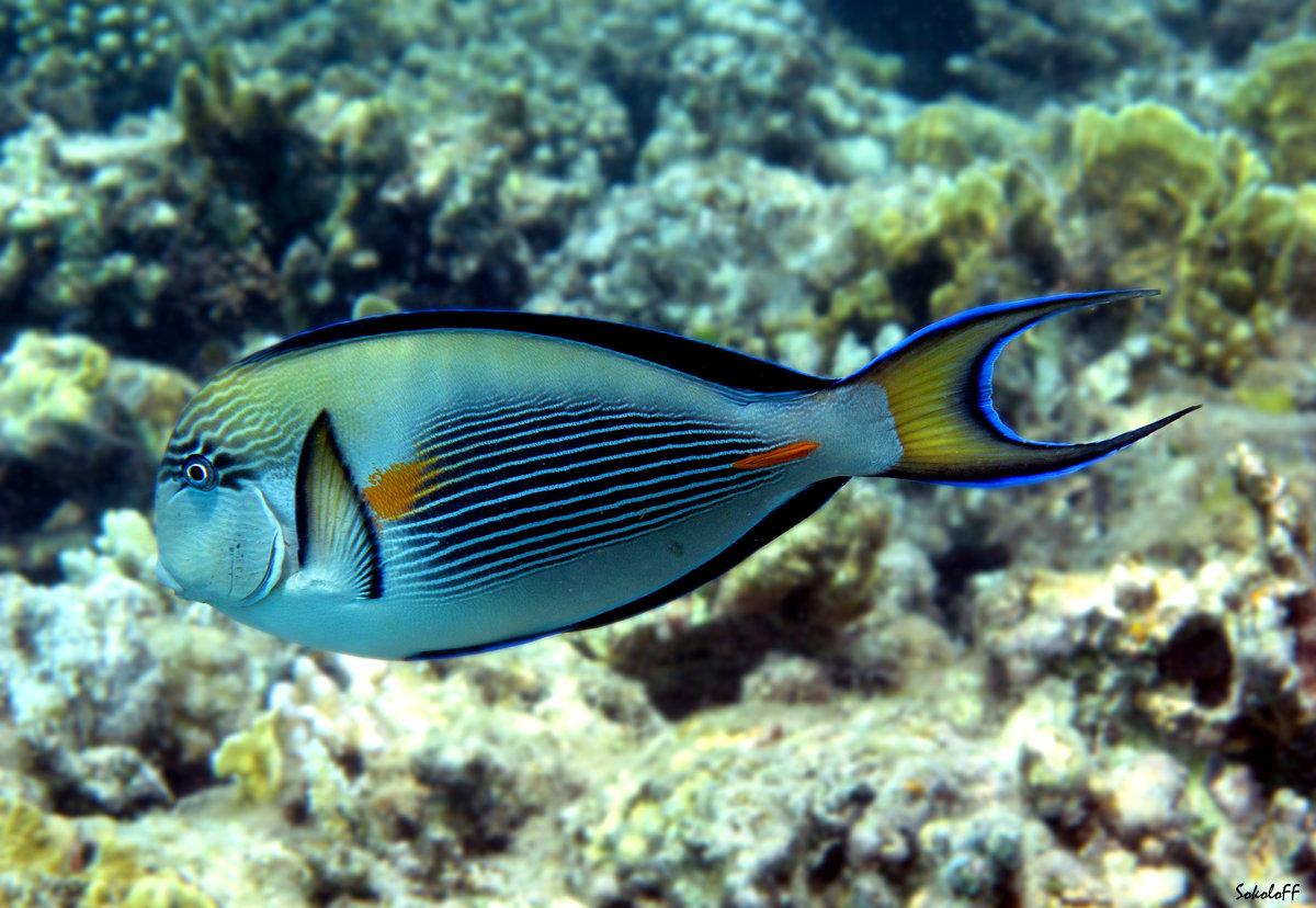 Конечно, рыб смотреть в египте нужно только в шарме!