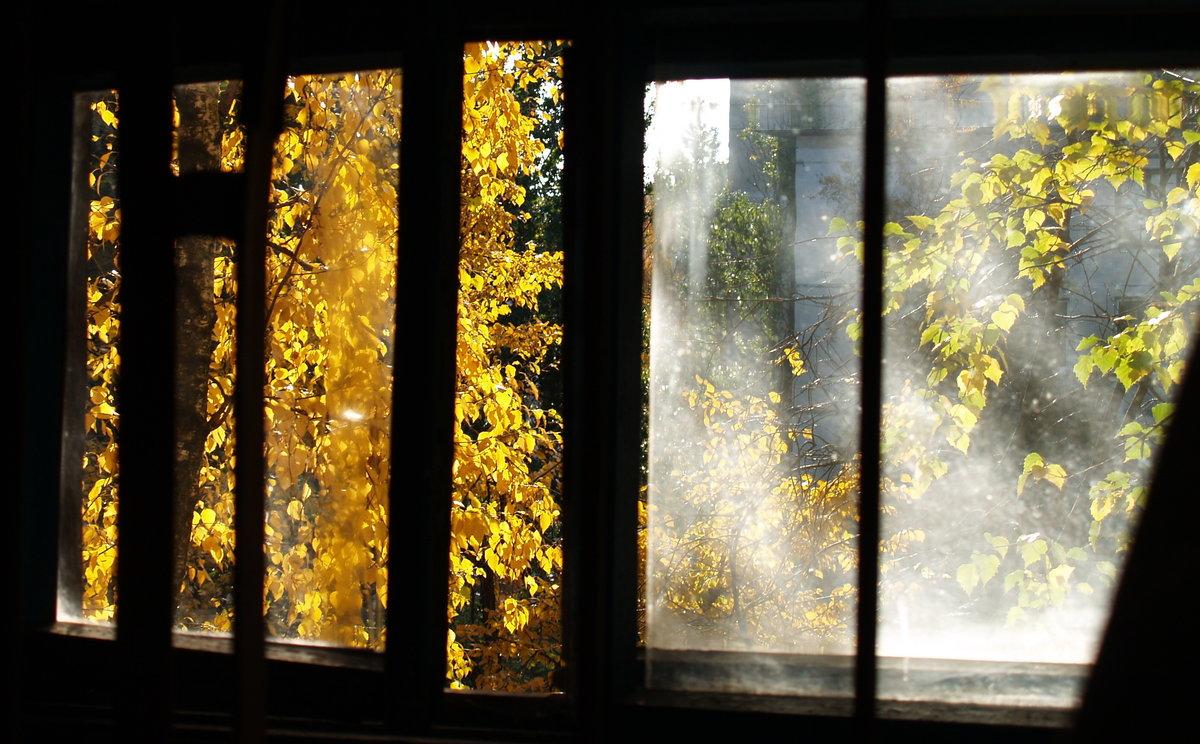 Гиф осень золотая за окном