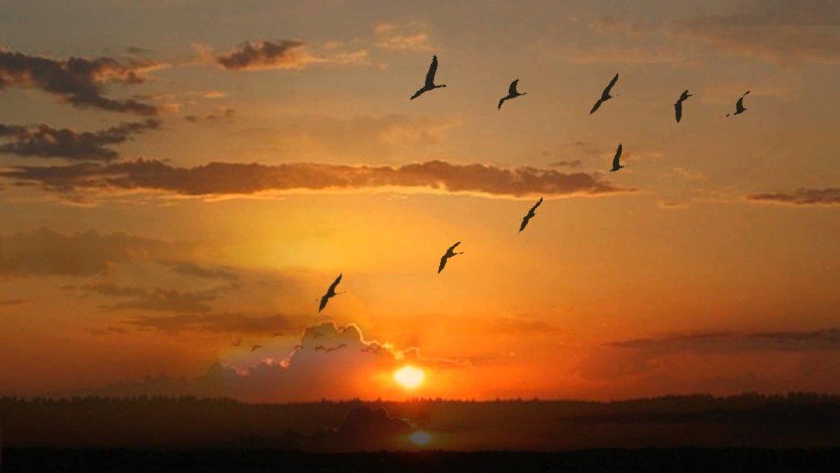 Поздравление, картинки журавлей в небе