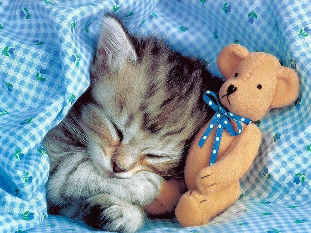 Открытки с британским котенком доброй ночи