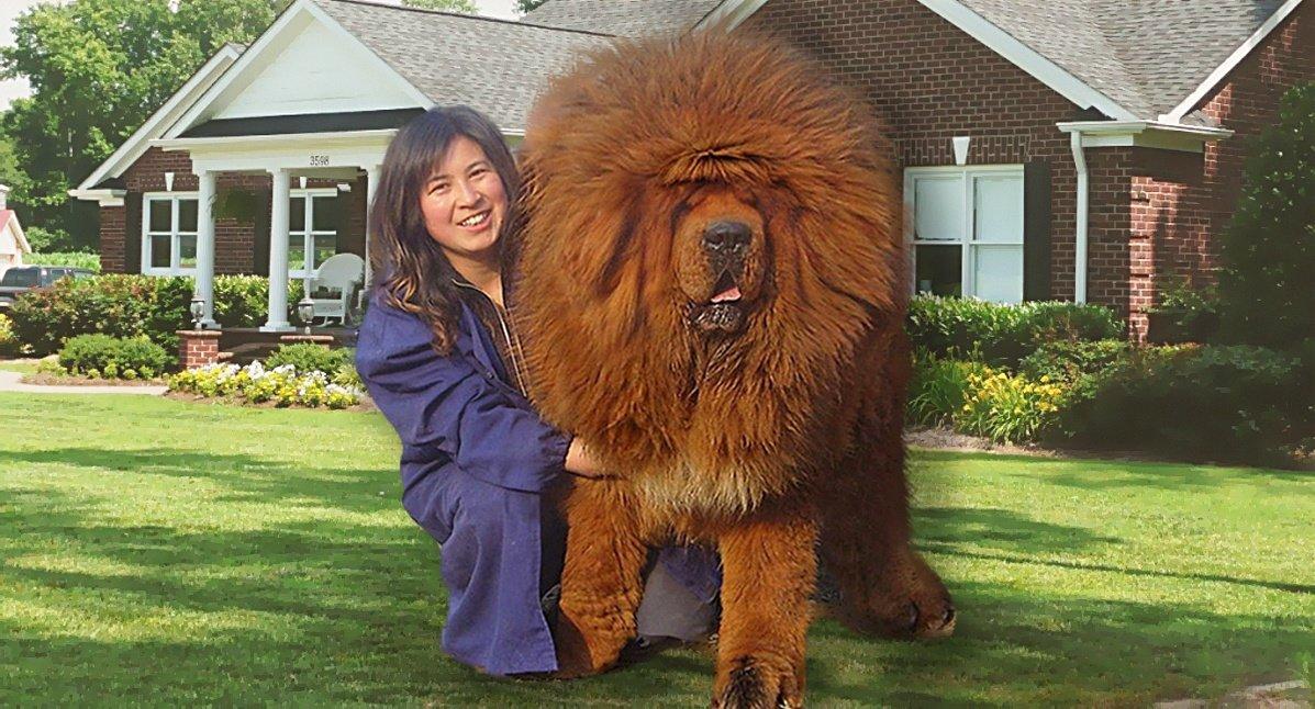 Покажите самую большую собаку в мире картинки