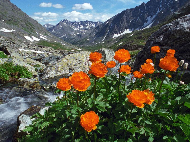 фото роза в горах чей президентский
