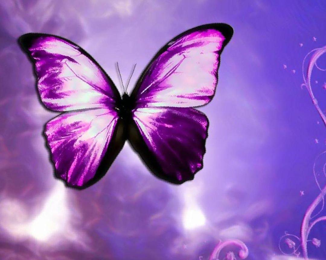 картинки с фиолетовыми рисунками характеристики