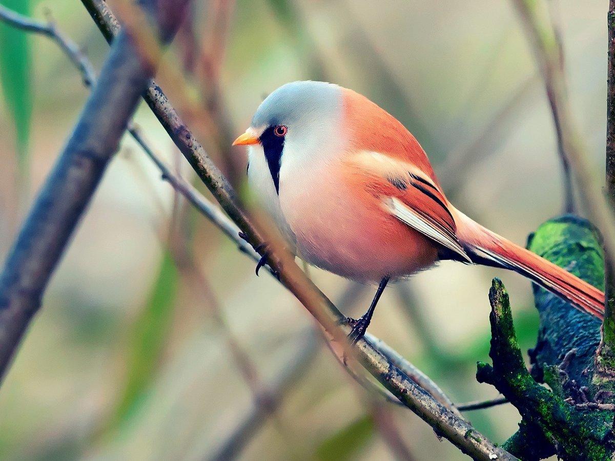 Птицы азербайджана фото внешнему