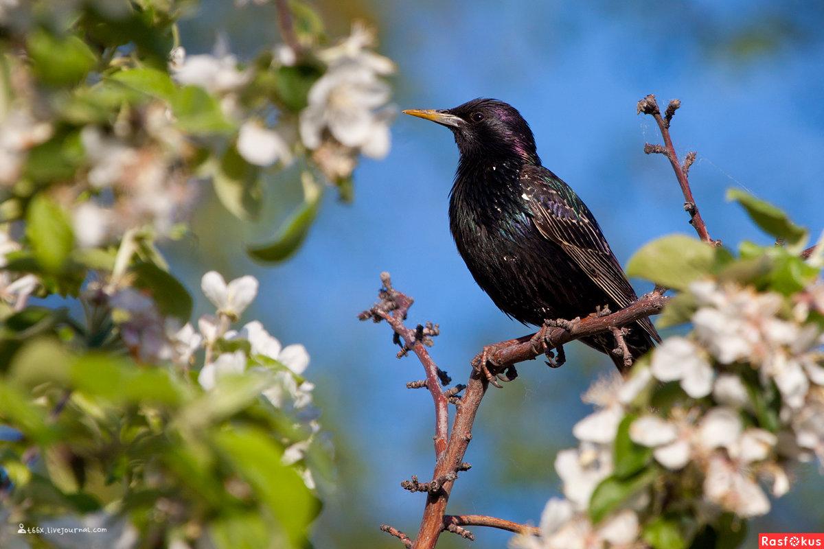 сын картинки первые птицы весны научной точки