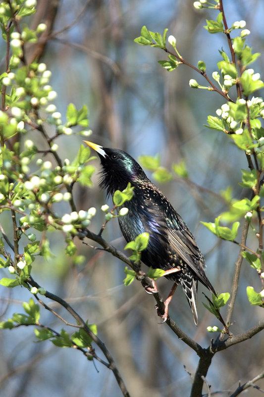 Первые весенние птицы картинки