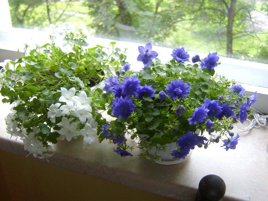 Букеты, где в челябинске купить цветок невеста жениху