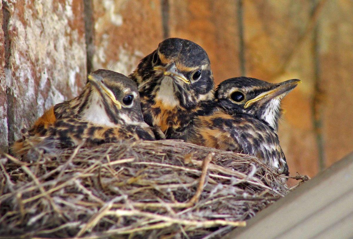 фото птенцы диких птиц фото и названия выразительный цветочный принт