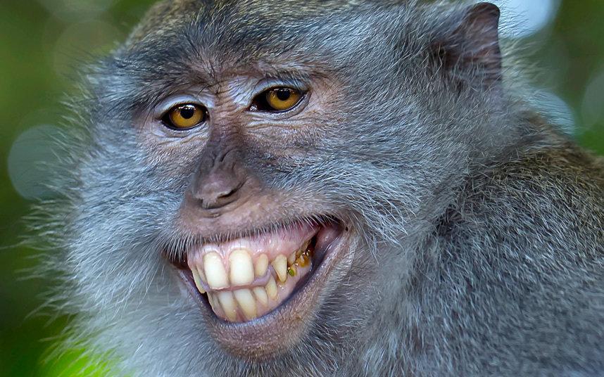 Картинки жкх, самые смешные картинки с животными в мире