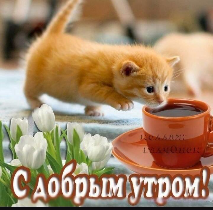 Видео открытки с животными с добрым утром, днем